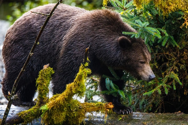 Canada: Escape to the wilderness and get back to nature without compromising on luxury