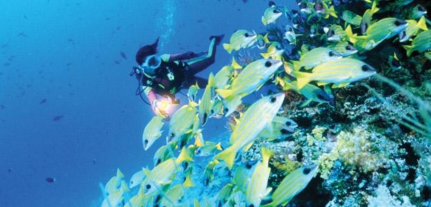 Maldives: Water world